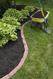 Mulching Around Hostas Royalty Free Stock Photo