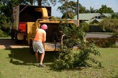 Mulching av trädfilialer Royaltyfri Bild