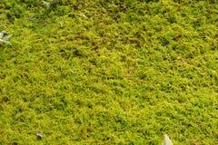 Mulching av växter Royaltyfria Foton