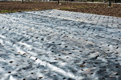 Mulching cloth ready for transplanting seedlings Royalty Free Stock Photos