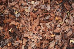 Mulching garden beds with pine bark pieces Royalty Free Stock Photos