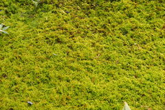 Mulching plantas Fotos de Stock Royalty Free
