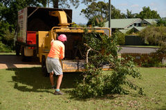 Mulching tree branches. KINGAROY, AUSTRALIA, MARCH 30, 2016: An unidentified woman feeds branches into a mulching machine to make mulch for garden beds Royalty Free Stock Image