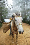 Mule. With bags on his back Royalty Free Stock Photo