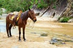 Mule Royalty Free Stock Image