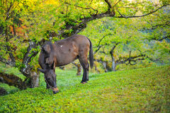 A mule Stock Images