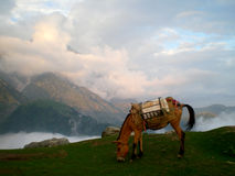 A mule above the clouds Royalty Free Stock Photo