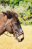 Mule brown graze side angle Stock Photos