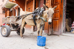 Mule cart in front of traditional buildings Royalty Free Stock Images