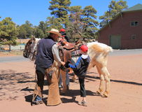 USA/Grand Canyon: Mounting a mule Royalty Free Stock Photos