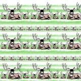 Mule deer buck. In green stripped grass Stock Image