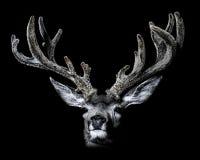 Mule Deer in Velvet Portrait Low Key Royalty Free Stock Photography