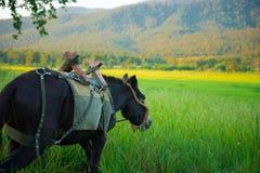 Mule graze,hinny Stock Images