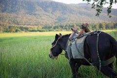 Mule graze,hinny Stock Photography