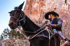 A mule guide takes visitors on a tour up the Bright Angel Trail at the Grand Canyon, USA. Grand Canyon, ARIZONA - October 22 2017: A mule guide takes visitors royalty free stock photo