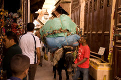 Mule i Medina av Fez, Marocko Royaltyfria Foton