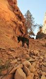 Mule in Petra, Jordan Stock Photos