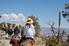 Mule Riders at the South Rim of the Grand Canyon. A line of mule riders take an excursion along the South Rim at the Grand Canyon National Park in Arizona royalty free stock photo
