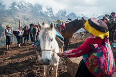 Mule service in Peru. VINICUNCA, PERU- OCTOBER 29: female guide in traditional wear holds white mule at high altitude grounds in Vinicunca, Peru on October 29 royalty free stock photo