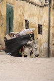Mule at the streets of Fez Medina, Morocco Royalty Free Stock Photos