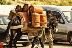 Mule at the streets of Fez Medina, Morocco Stock Photography
