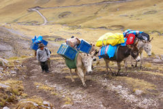 Mule train, carrying loads in high mountains Royalty Free Stock Photography