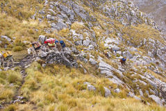 Mule train, carrying loads in high mountains Royalty Free Stock Photo