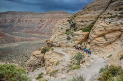Mule Train - Havasu Canyon - Grand Canyon West Royalty Free Stock Photo