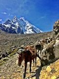 Mule Train on the Salkantay Trail in Peru Royalty Free Stock Photos
