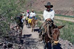 Mule trekkers pass a hiker, Grand Canyon, AZ, US Royalty Free Stock Images