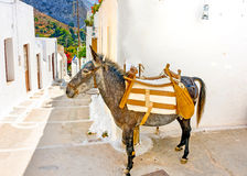The mule. Typical beautiful narrow road with a mule in Langada a vilage of Amorgos island in Greece Stock Photos