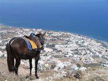 Mule at viewpoint in Santorini. Working mule resting on the top of a mountain in Kamari,Santorini royalty free stock photos