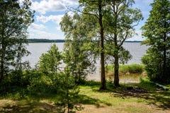mulen dag vid sjön med vattengräs Fotografering för Bildbyråer