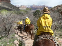 Muleride在大峡谷在美国 免版税库存图片