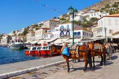 Mules au port de l'île d'hydre Photographie stock
