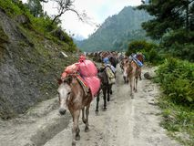 Mules carrying load from Bagarchhap village - Nepal Stock Photos