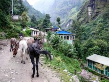 Mules in Chyamche village - Nepal Stock Photos