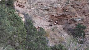 Mules Convoy in the distance. Establish shot clip stock video footage