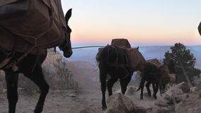 Mules convoy at Grand Canyon with audio. Establish shot clip stock video