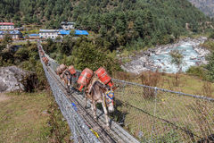 Mules crossing suspenion bridge. Trekking from Namche Bazaar to Monzo Nepal Sagamatha National Park Royalty Free Stock Photos