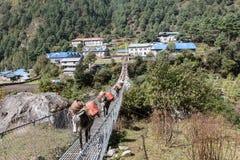 Mules crossing suspenion bridge. Trekking from Namche Bazaar to Monzo Nepal Sagamatha National Park Stock Photos