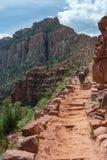 Mules dans Grand Canyon Photographie stock libre de droits