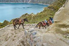 Mules de monte de personnes à la route dans le lac Quilotoa, Equateur Photo libre de droits