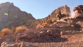 Mules at the Grand Canyon. Establish shot clip stock video