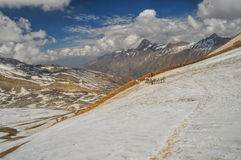 Mules in Himalayas Royalty Free Stock Photography