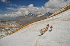 Mules in Himalayas Royalty Free Stock Photos