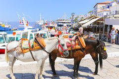 Mules of Hydra island - Greece islands Royalty Free Stock Image