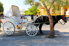 Mules of Hydra island - Greece islands Royalty Free Stock Photo
