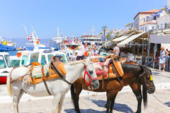Mules of Hydra island - Greece islands. Aug. 15 2014 Tourists Enjoy Trip to Greece island Royalty Free Stock Images