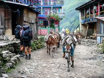 Mules in Jagat village - Nepal Stock Photos
